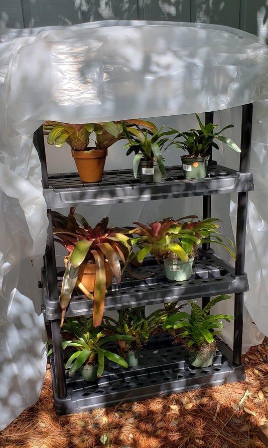 Makeshift Greenhouse Mike Fagan