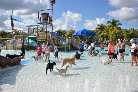 Sailfish Splash Park is going to the dogs — at least for one day!