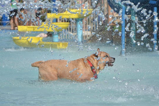 The Pooch Plunge is the perfect opportunity for dogs to romp about at Sailfish Splash Park.