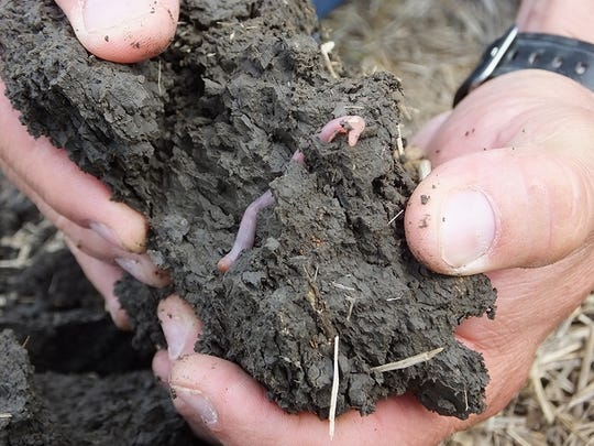 Take note of the life inside of your soil, and how it changes over time. Healthy soils are generally full of earthworms and other organisms.