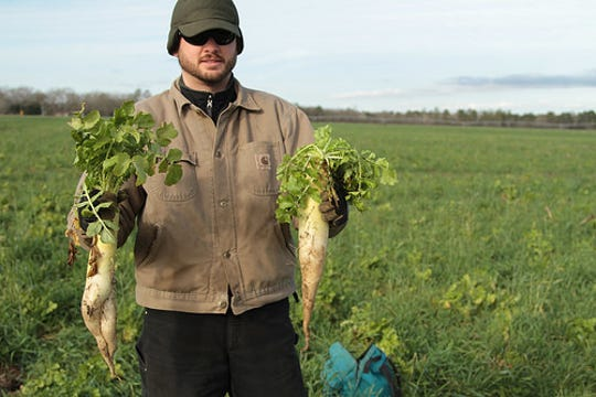 Daikon radish – commonly called tillage radish – can break up plow pans while adding organic matter.