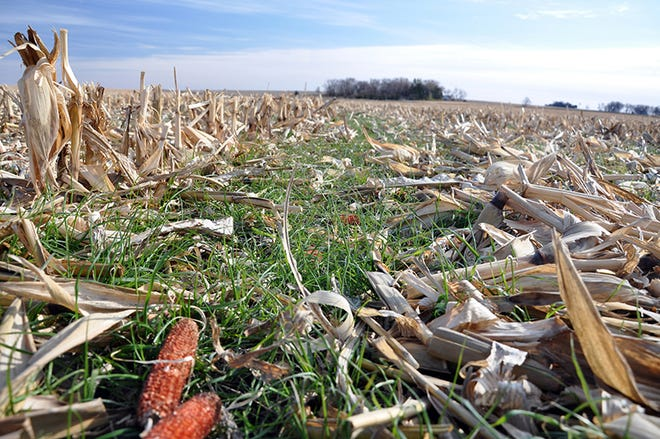 No-till minimizes soil disturbance while leaving valuable cover and reducing erosion.