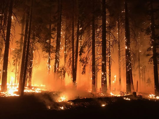 The Camp Fire consumes trees in Northern California.