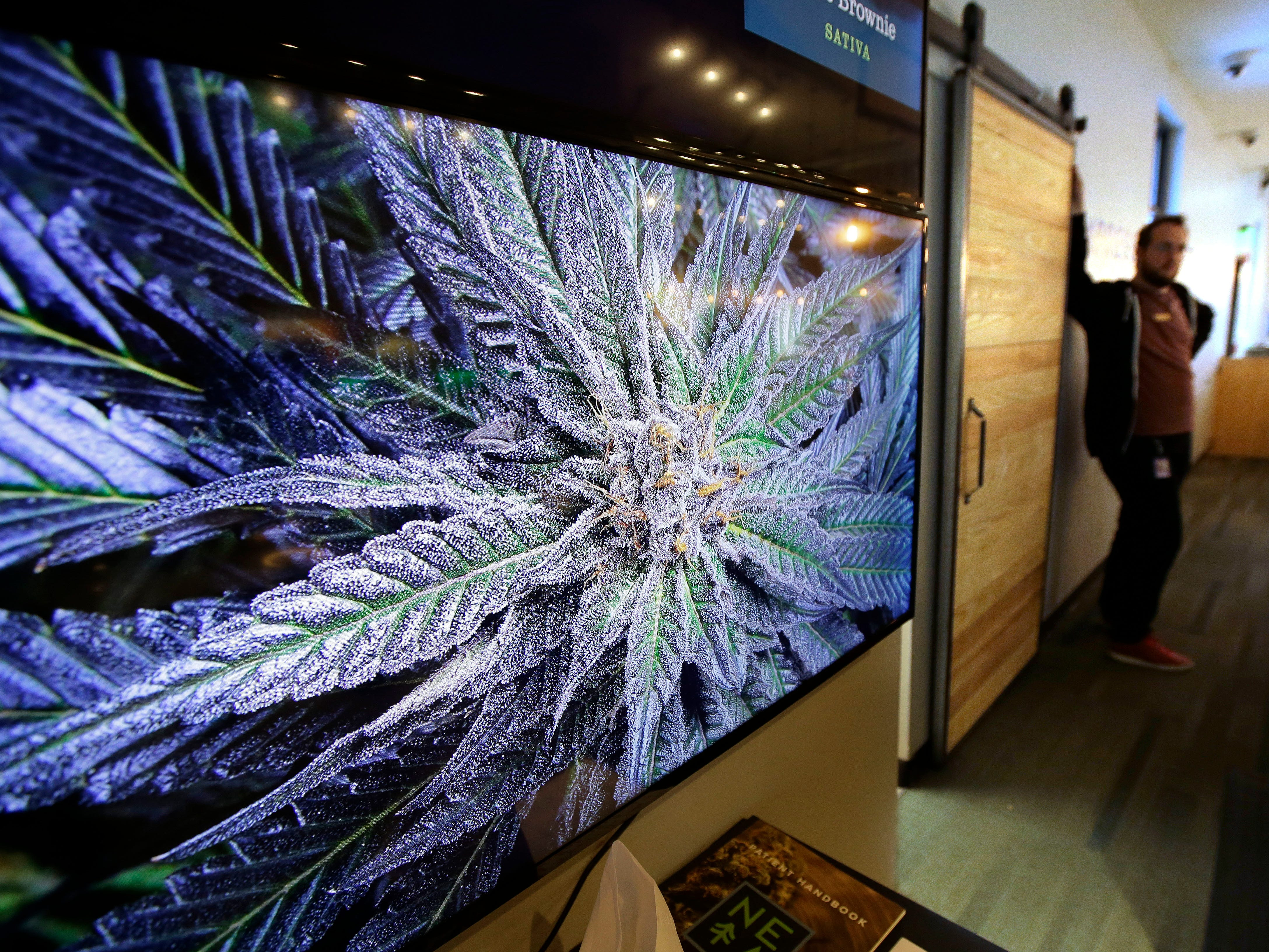 A cannabis plant is displayed on a screen at New England Treatment Access medical marijuana dispensary, in Northampton, Mass, Oct. 17, 2018. New England Treatment Access, and another store in Leicester, Mass., have been given the green light to begin selling recreational pot on Tuesday, Nov. 20, making them the first commercial pot shops in the eastern United States.