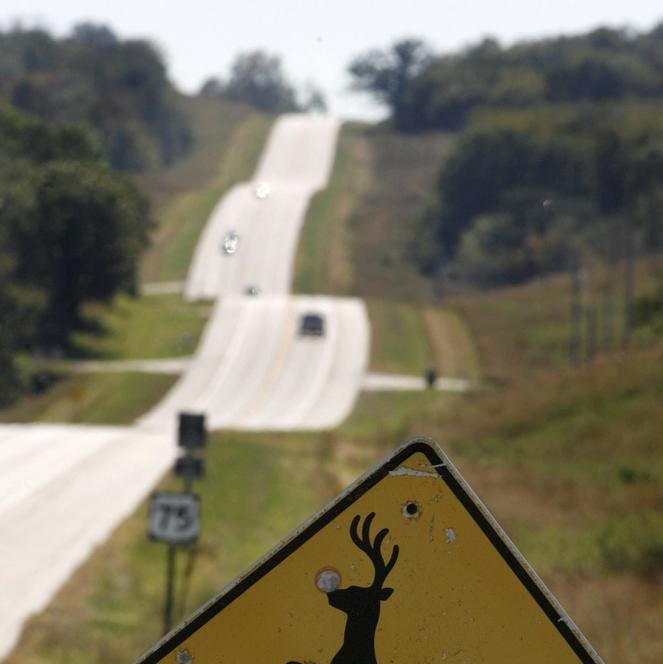Forget burgers, roadkill could be on the menu soon in California