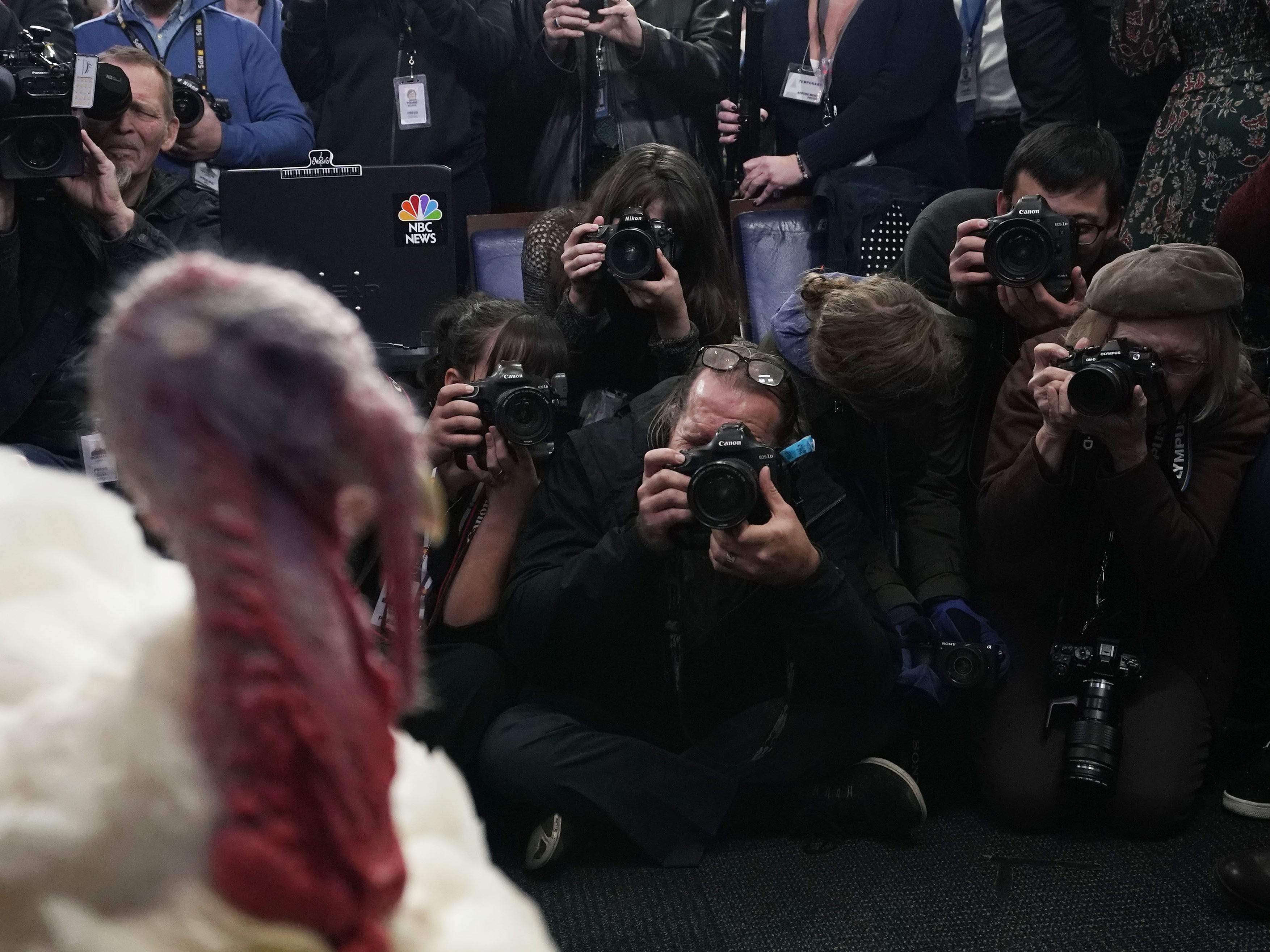 One of the turkeys that will be pardoned is brought into the James Brady Press Briefing Room for a visit with members of the press at the White House in Washington, Nov. 20, 2018.