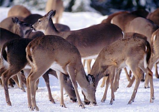 Ap Deer Hunting A Usa Mi