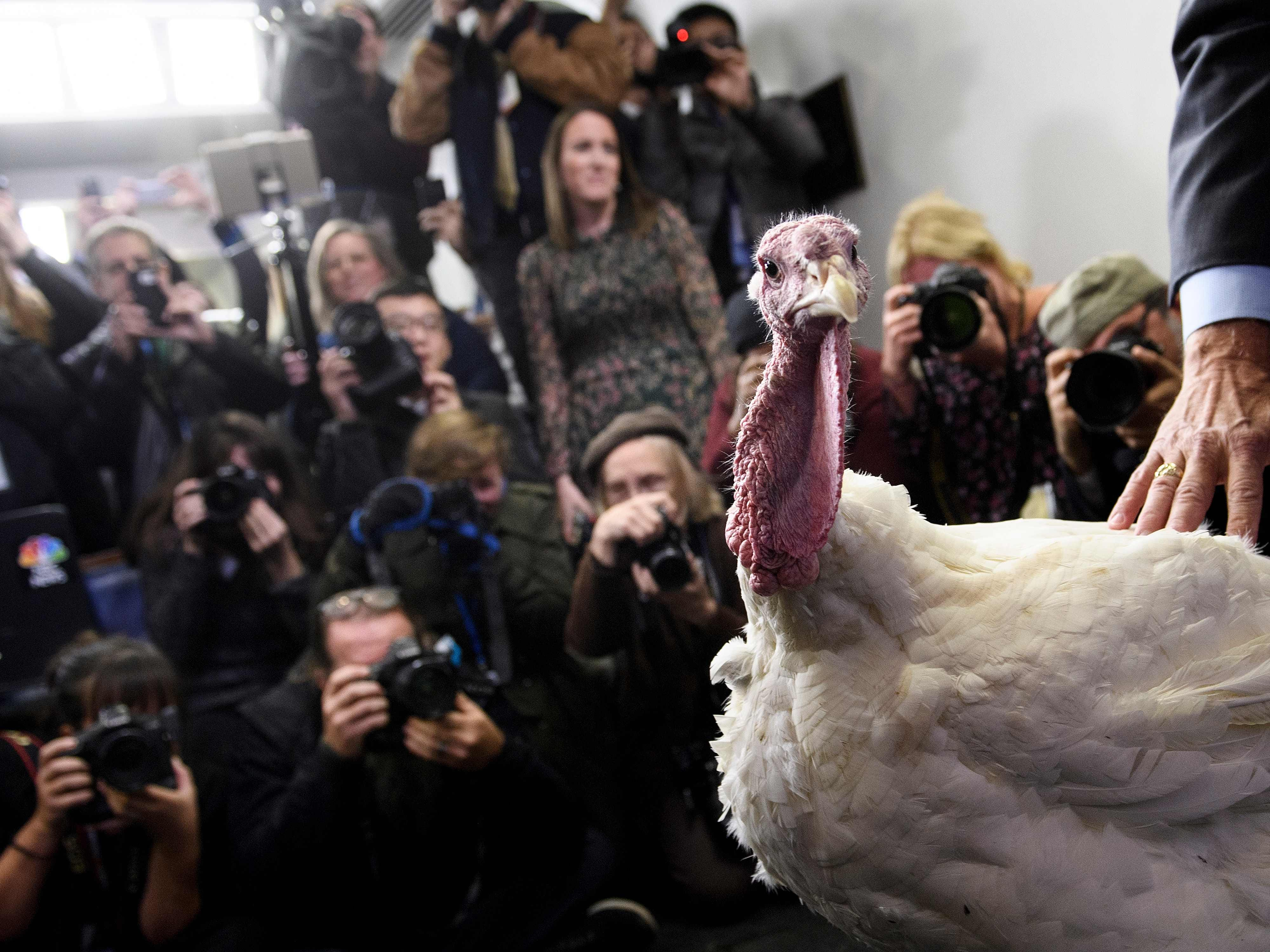 A turkey is shown to the press before President Trump participates in a turkey pardoning before the Thanksgiving holiday, Nov. 20, 2018, in Washington.