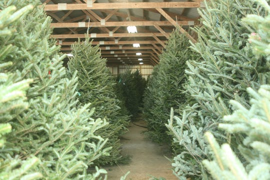 Goebel Farms displays re-cut pine, spruce and fir trees in their barn.