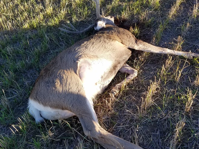 One of the two deer that were left to waste.