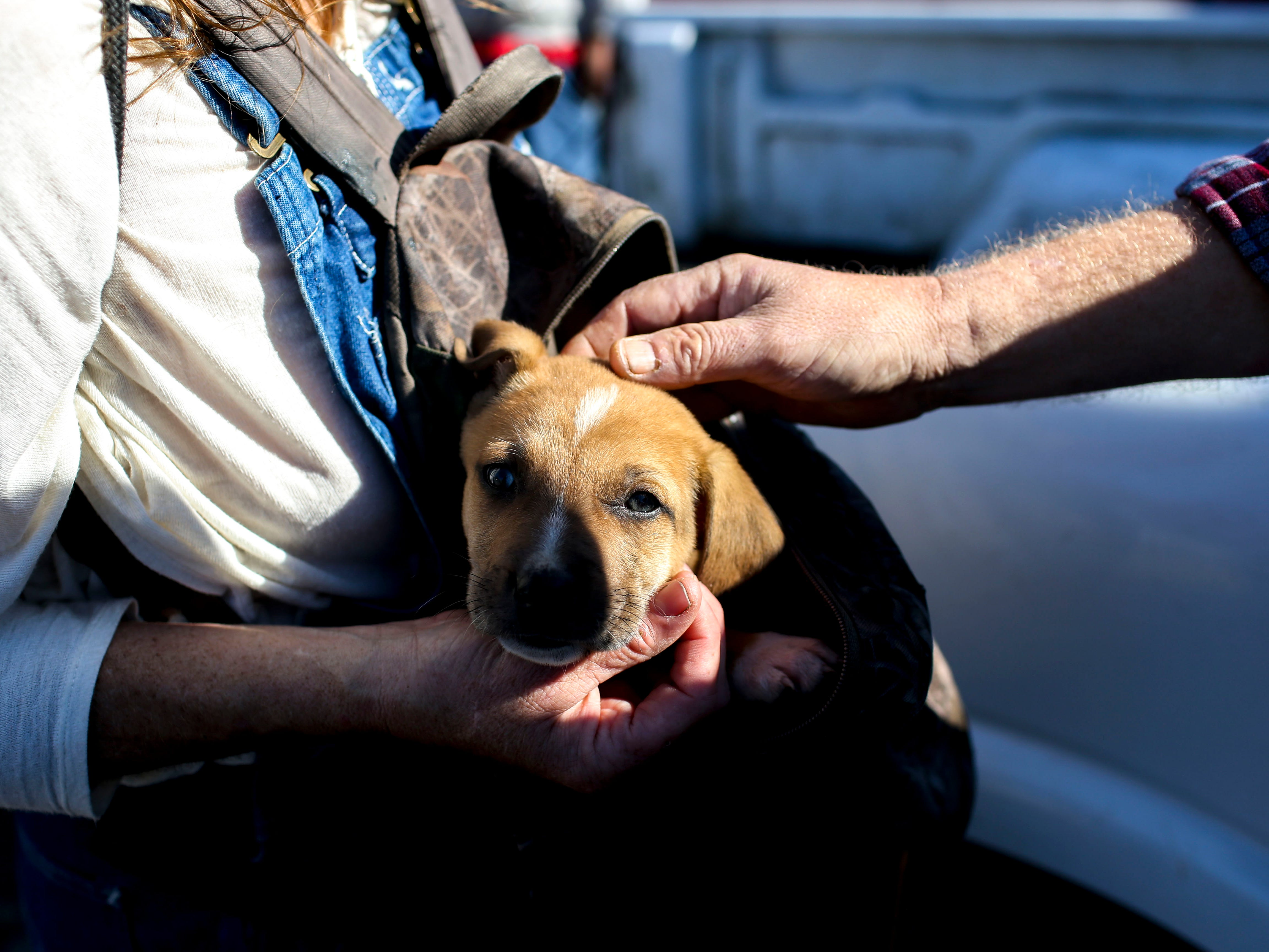 A visitor to Safe Harbor carries a puppy given to her by her boyfriend in a backpack at the annual Thanksgiving meal put on by Safe Harbor Day Mission in Jackson, Tenn., on Wednesday, Nov. 21, 2018.