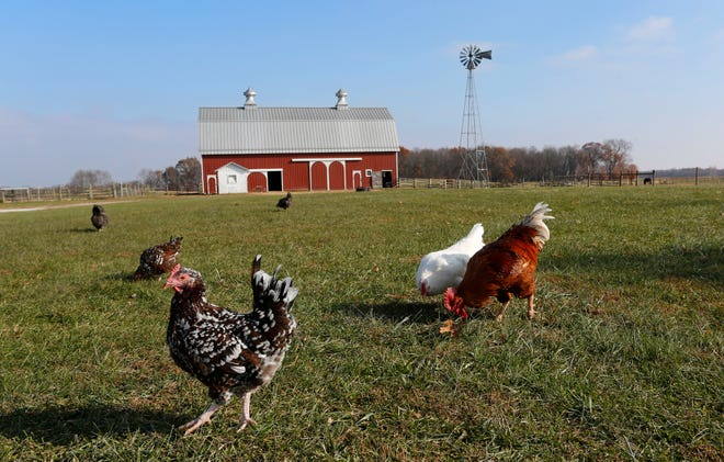 Chickens wander the grounds at the Farm at Prophetstown Wednesday, November 21, 2018, near Battle Ground.
