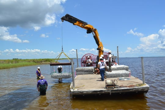 The Nature Conservancy sank baskets with rock and shell to develop oyster habitats last summer in Calcasieu Lake.