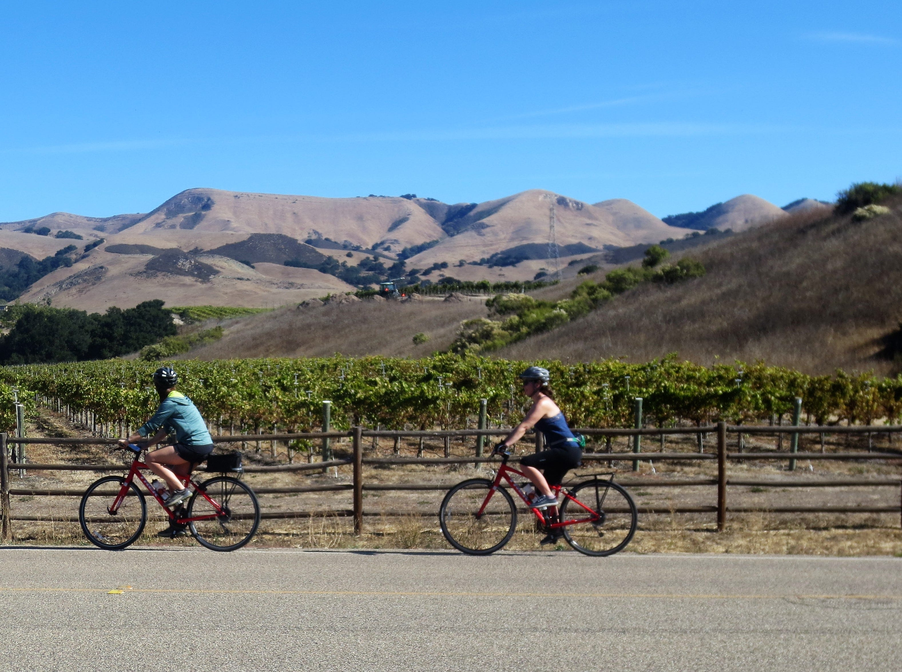Cyclists on a bike and wine tour in the Edna Valley of San Luis Obispo County, California.