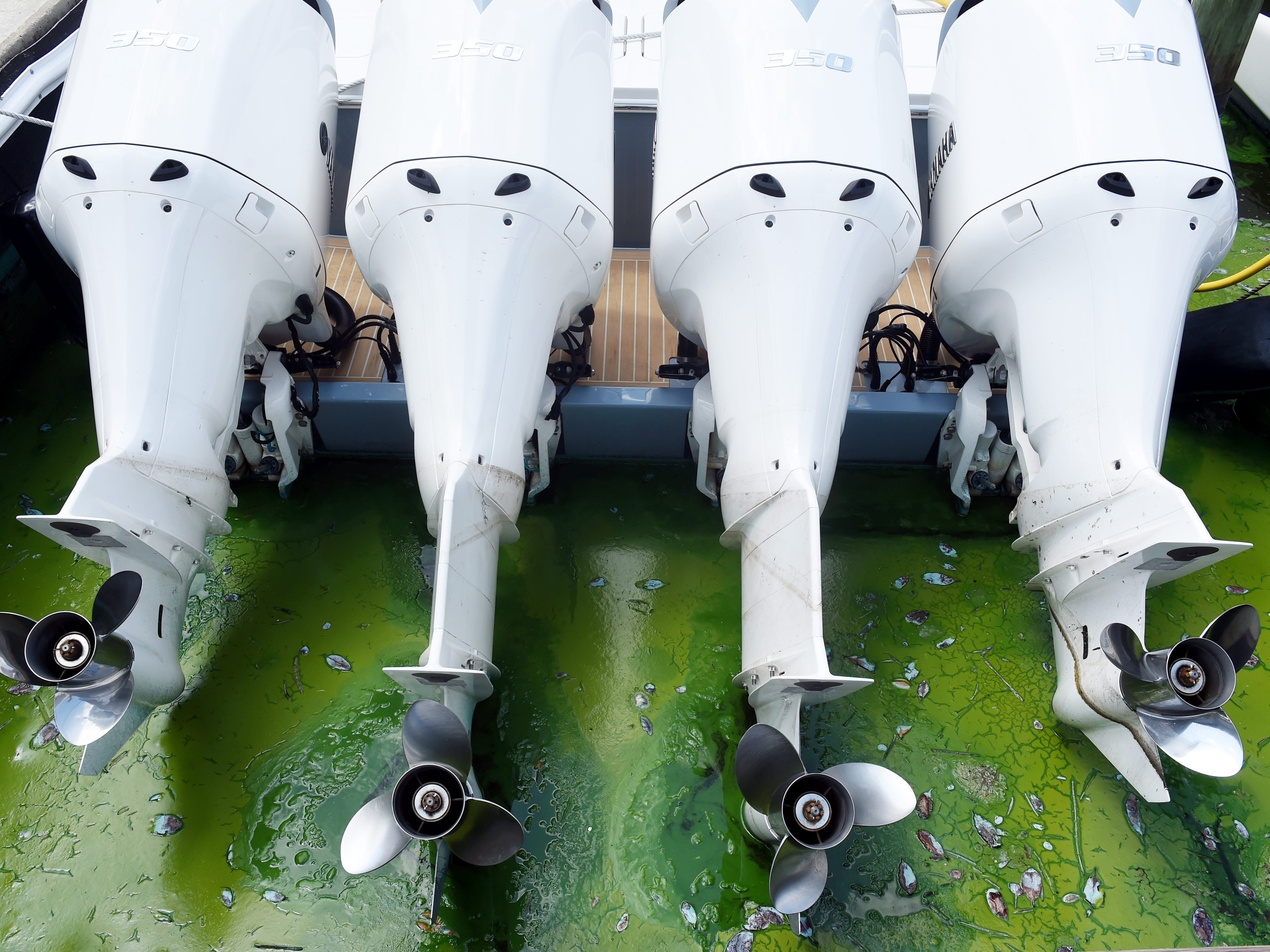 """A thick layer of blue-green algae floats through the boat slips at Sovereign Yacht Sales in Stuart on Thursday, July 26, 2018. Employees a re now being asked to wear ventilated masks when working outside. """"We don't want them breathing in that bad stuff,"""" said Tom Cubr, a Sovereign yacht broker. """"It's harmful, and we've got to take care of our employees."""""""