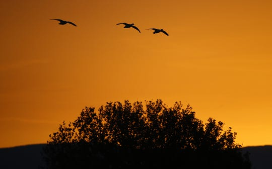 The sunrise provides a beautiful backdrop to the tens of thousands of sandhill cranes and snow geese, among other species, at Bosque del Apache National Wildlife Refuge.