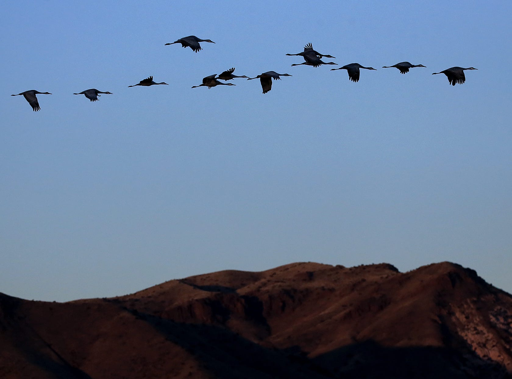 Sandhill Cranes are silhouetted against the Chupadera Mountains as they arrive back at Bosque del Apache National Wildlife Refuge after a long day of hunting food in the Rio Grande valley.