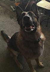 Greta, a 5-year-old German shepherd, smelled propane and woke up her owners, saving their lives.