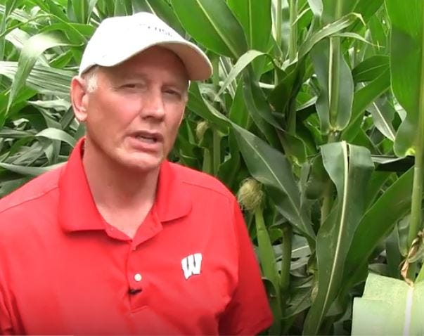 University of Wisconsin Extension Service entomologist Bryan Jensen explains how to count corn rootworm beetles during a video shoot.