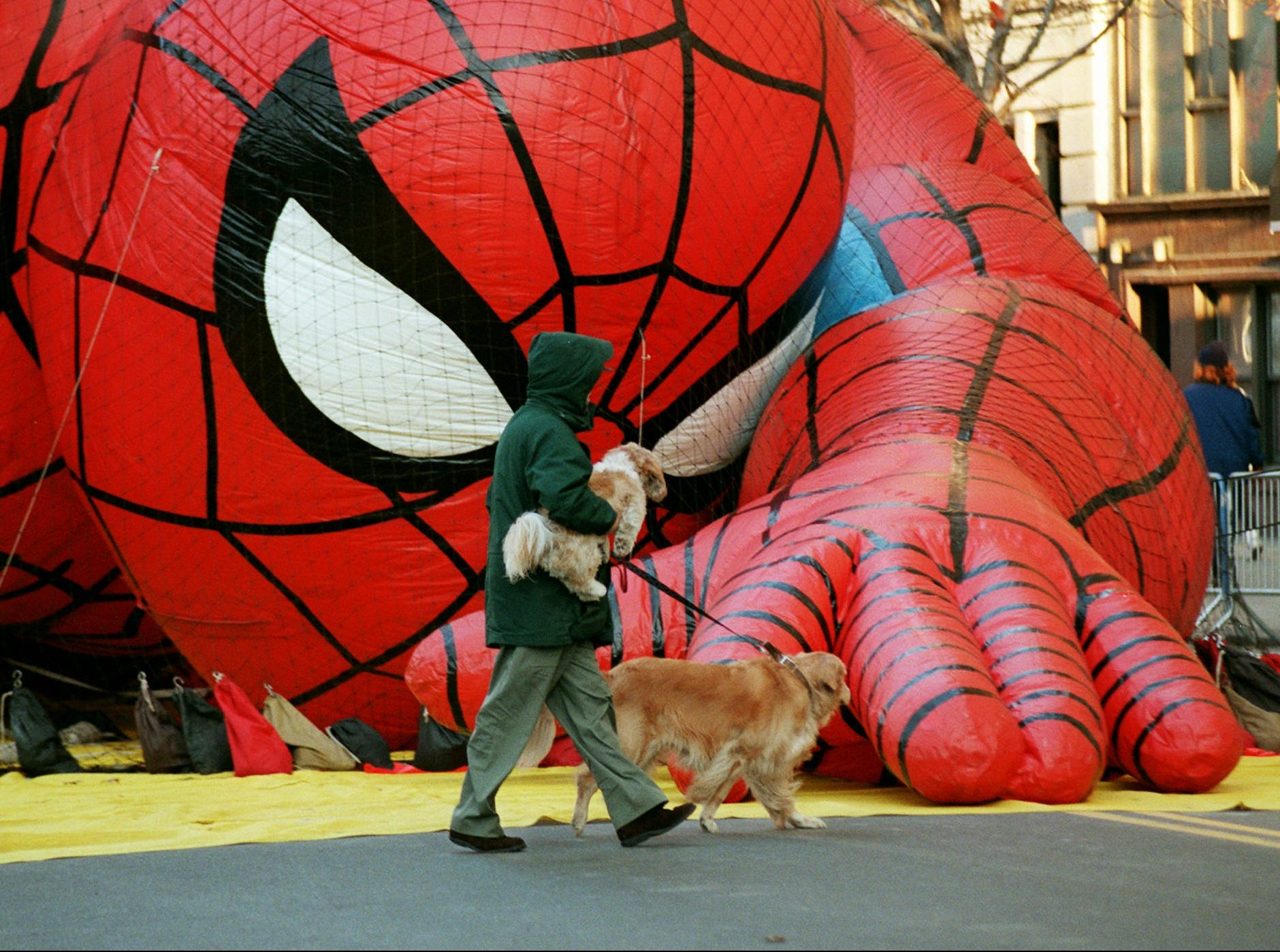 -  -Spider-Man, Macy's Thanksgiving Day Parade official Super Hero balloon, keeps a watchful eye on a pedestrian walking his dogs prior to the start of the parade,Thursday, Nov. 27, 1997 in New York. Wind gusts of 40 mph were reported in the area as the parade, famous for its huge helium balloons of cartoon characters, got under way. (AP Photo/Emile Wamsteker)