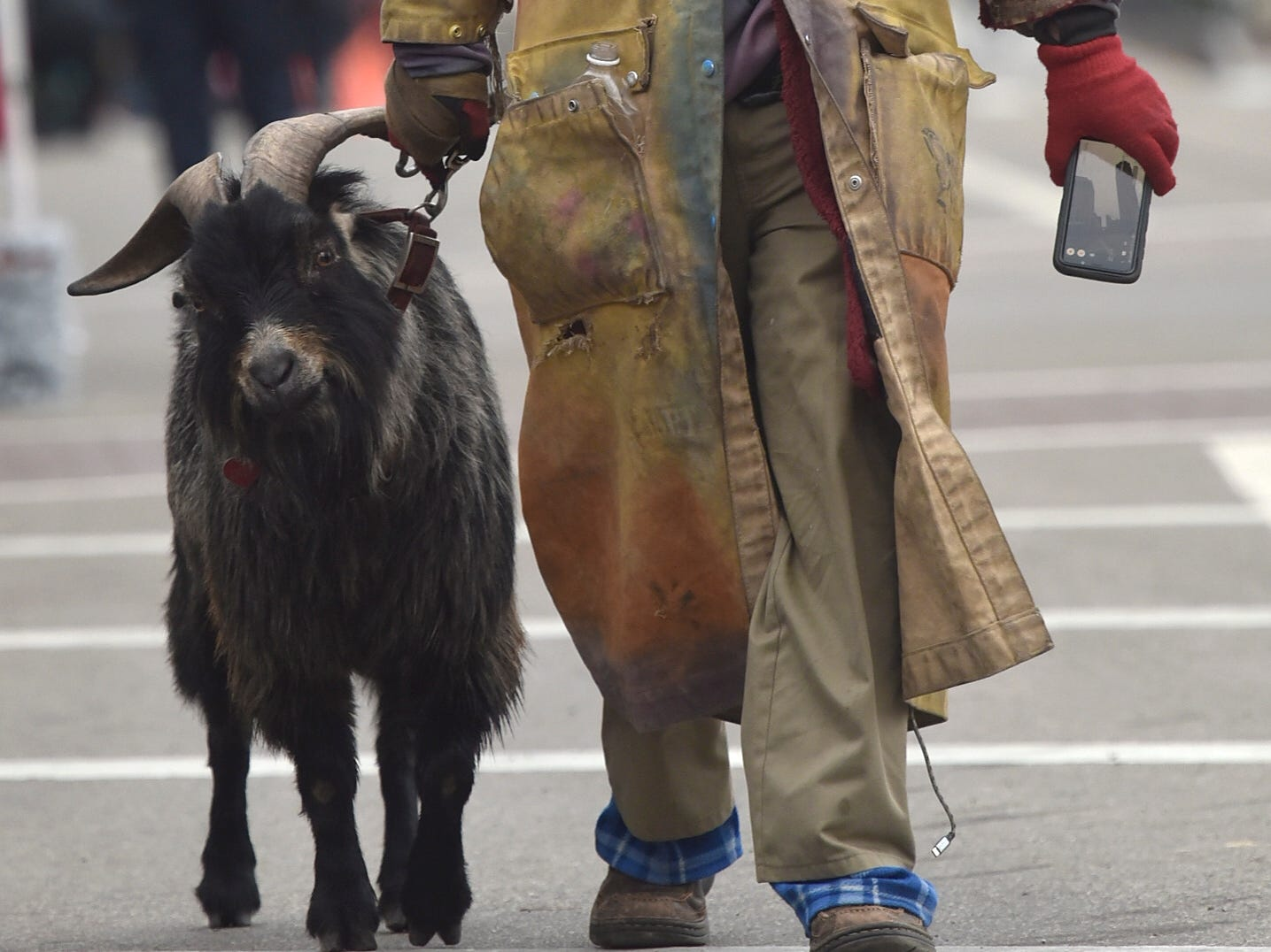 Erick Brown, of Detroit, leads his six-year-old male goat named Deer.