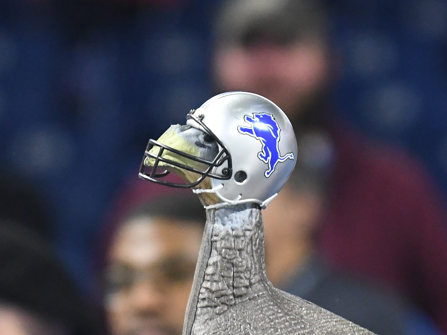A helmet wearing gobbler contemplates the Lions 23-16 loss to Chicago Bears on Thanksgiving Day.