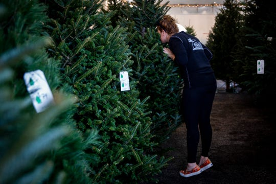"""Allison Durian inspects a tree on Thursday, November 22, 2018, at Heath Christmas Trees in Naples. Durian and her mother, Wynne Ridgway, come to the tent multiple times each year to buy their trees and sometimes just to """"get a sniff"""" of the merchandise."""