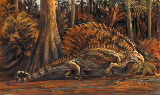 An artist's rendering of a gordodon, a new sail-backed reptile based on an incomplete skeleton found in Permian age rocks near Alamogordo.