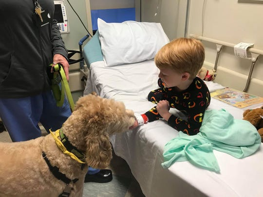 Logan Shane, 6, of Dallastown pets York Hospital therapy dog Lulu before surgery on Tuesday, Nov. 20, 2018.