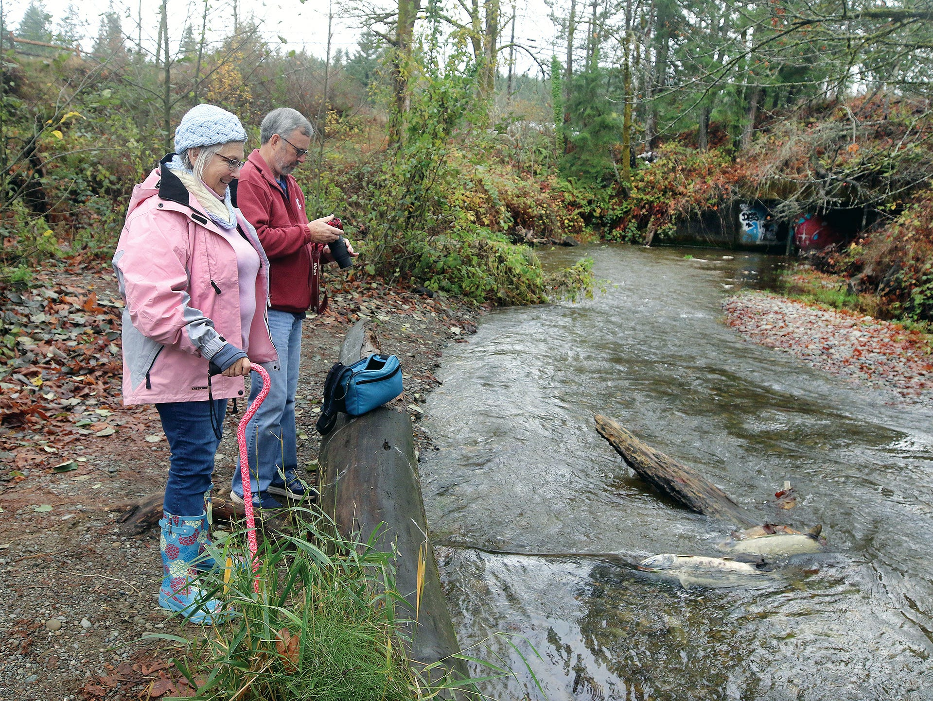 Patricia and Daryll Brady of Bremerton watch the salmon at the Chico Salmon Park on Friday, November, 23, 2018. Chico Creek has finally gotten enough rain for the chum salmon to spawn.
