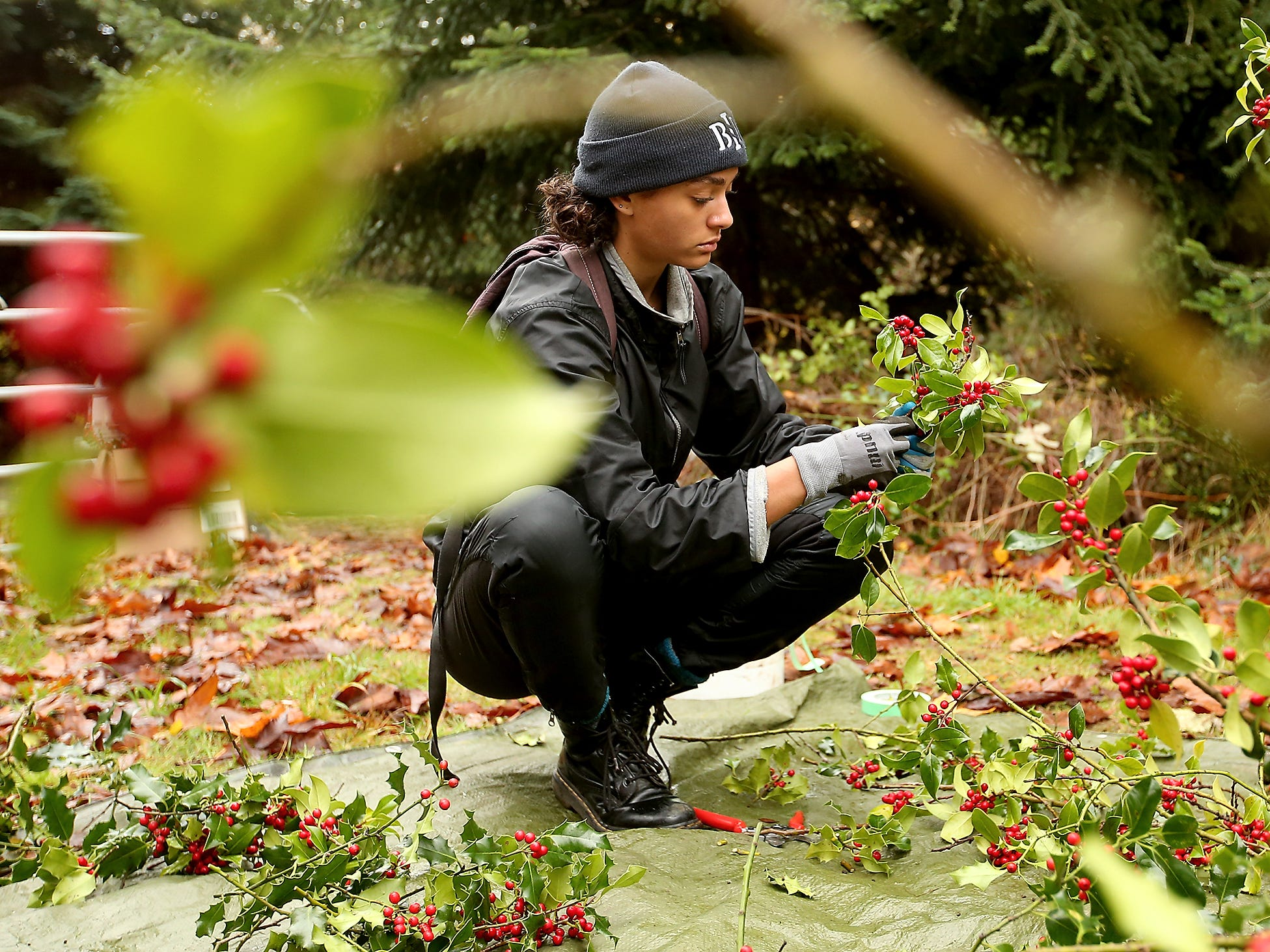 Volunteer Naszya Bradshaw cuts and bundles holly at Bainbridge Island's M&E property on Friday, November 23, 2018. The annual event, organized by Sustainable Bainbridge's Weed Warriors, cuts down a holly tree and volunteers tag each bundle with a card carrying information about the invasive habits of holly, methods for disposing of holly, and plants that can be substituted. The bundles will be given away for free at the Bainbridge Island Senior Center Christmas Sale on Saturday, November 24th.