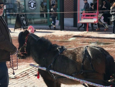 A miniature horse stands in middle of Church Street, offering rides to visitors. Nov. 23, 2018.