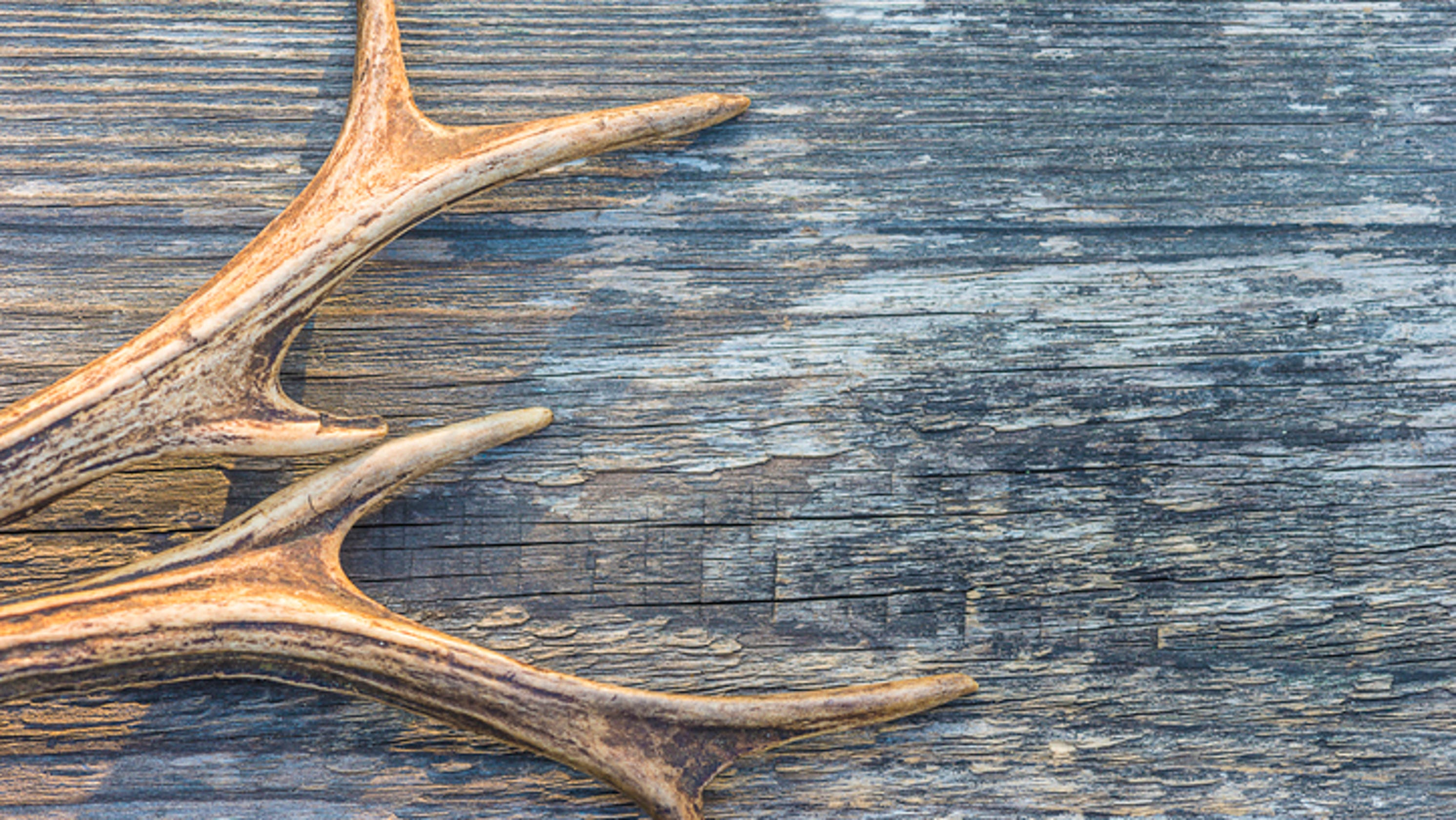Shed hunting in Pa : What it is, what you can and can't do