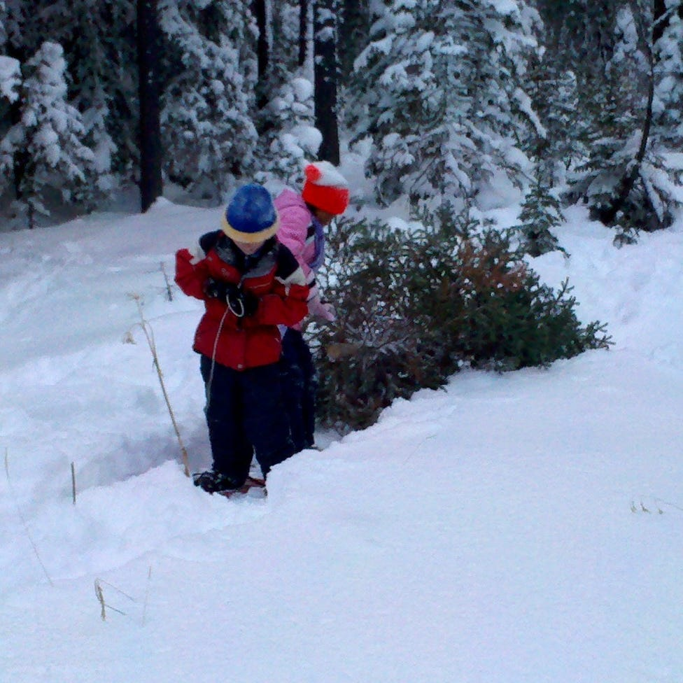 Outdoors briefs: Permits to get a Christmas tree are now available