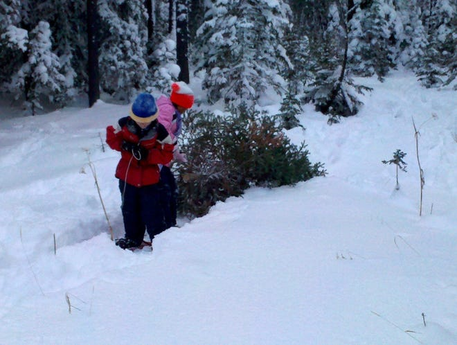 In this 2013 photo, Gabe Cunningham and Kiahlee Trottier, both 8, drag a Christmas tree back to the car after cutting it on the Lewis and Clark National Forest.