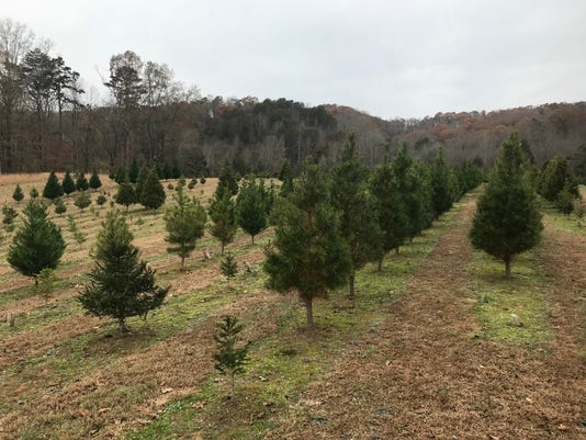 Bluebird Christmas Tree Farm