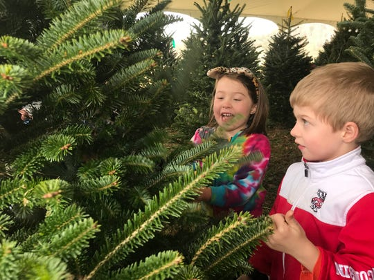 Twins Claire and Dillon Adams, age 6, fluff the tree their family chose to bring home for the holidays from Bluebird Christmas Tree Farm.