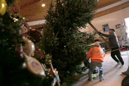 The 18-foot Fraser Fur is put into place at the Herlihy Christmas Open House on Friday.