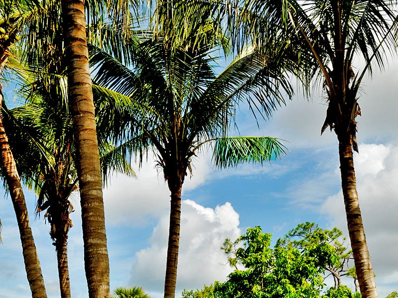 Naples Botanical Garden's Kapnick Caribbean Garden tells the natural and cultural history of the Caribbean islands through the lens of its landscapes.