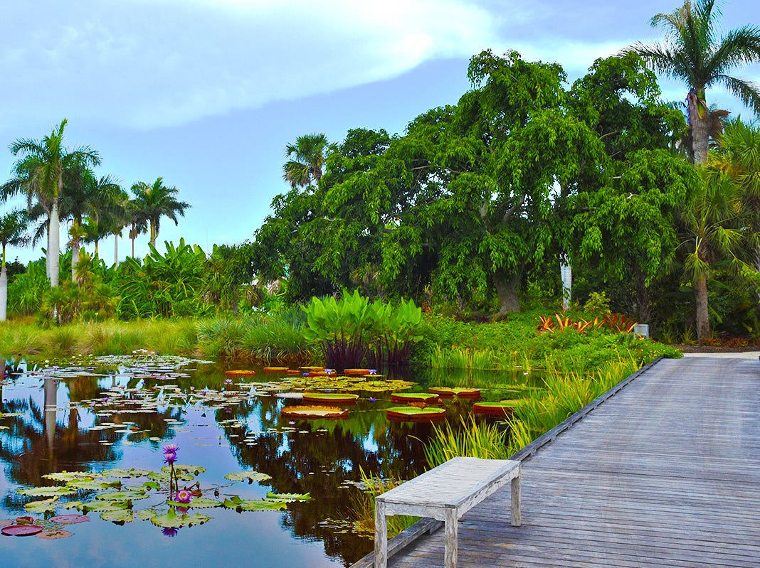 The Naples Botanical Water Garden is located in the heart of the property, atop the Mary and Stephen Byron Smith Family River of Grass. A landscape reminiscent of Claude MonetÕs water lily pool, the garden showcases colorful blooms from around the world.