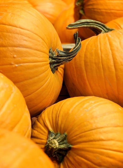 1031 Nwtb Pumpkin