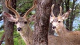 You are bound to see The deer and elk in the forests of Ruidoso, New Mexico.