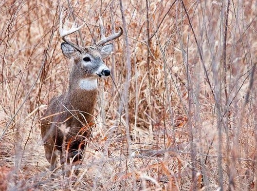Firearms deer hunters had  good weather during the 10-day November season.