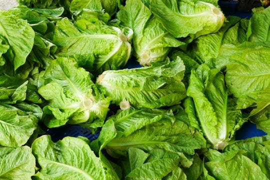Since October, at least 43 people in 12 states have gotten sick, with at least 16 hospitalized, from the same strain of E. coli in the romaine lettuce outbreak, according to the Centers for Disease Control and Prevention.
