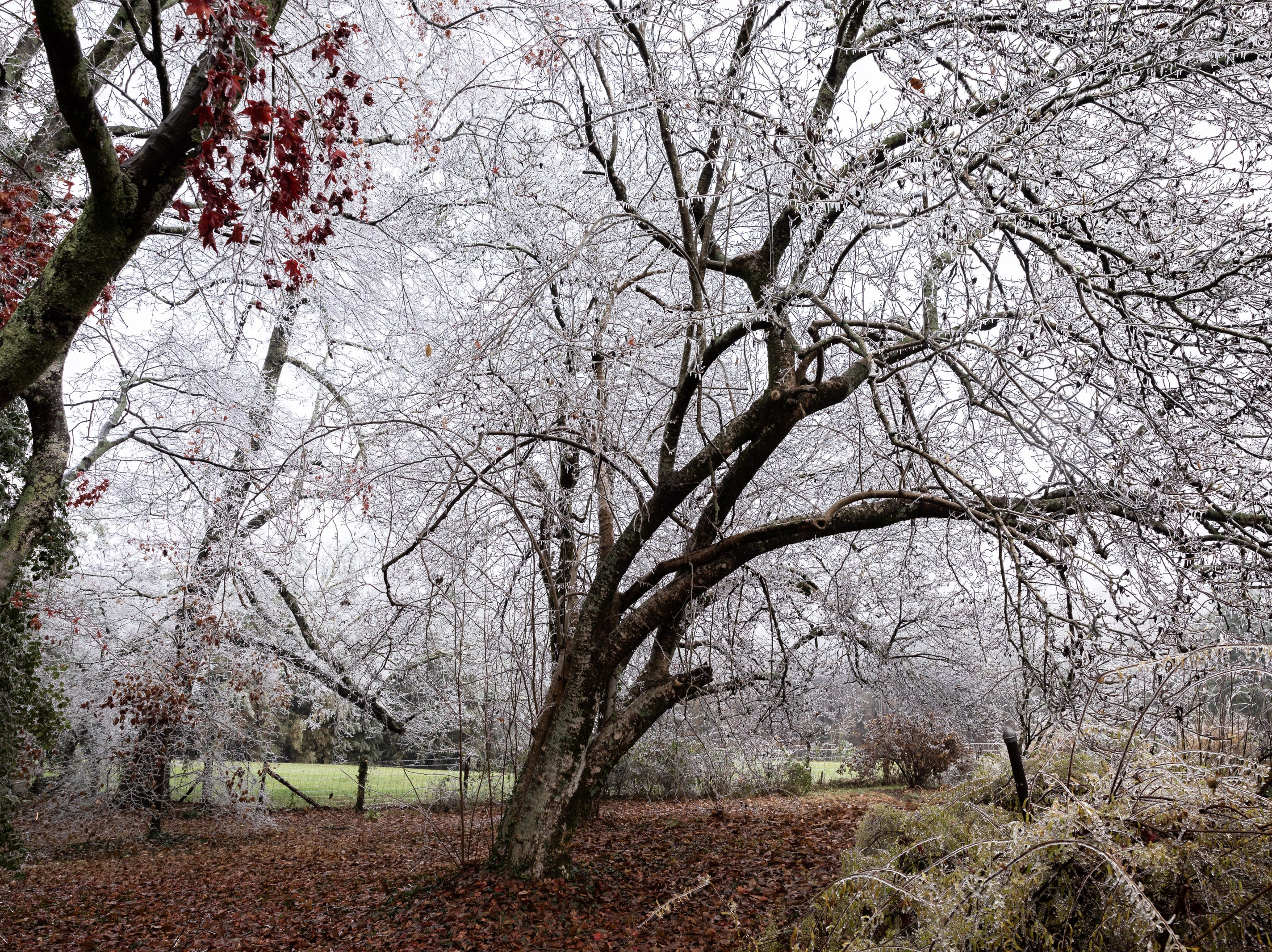 Ice covers the branches of trees at the Carl Sandburg home in Flat Rock where the park celebrated its 50th anniversary Nov. 24, 2018, with their Christmas at Connemara event featuring live music, storytellers and tours of the home.