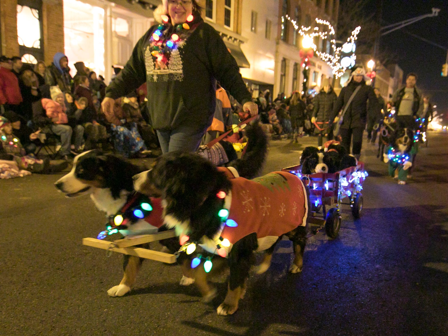 The Heart of Michigan Bernese Mountain Dog Club entry features dogs with Christmas Light collars in the Fantasy of Lights parade Friday, Nov. 23, 2018.