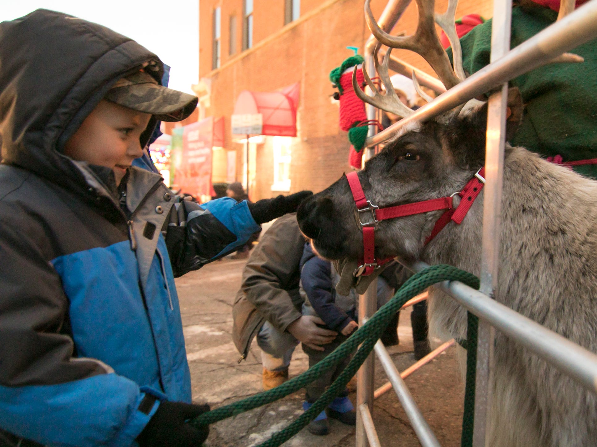5-year-old Jonathon Osborne pets the nose of Poinsettia, one of several reindeer who were brought to the Fantasy of Lights event Friday, Nov. 23, 2018 by Shiny Star Ranch.
