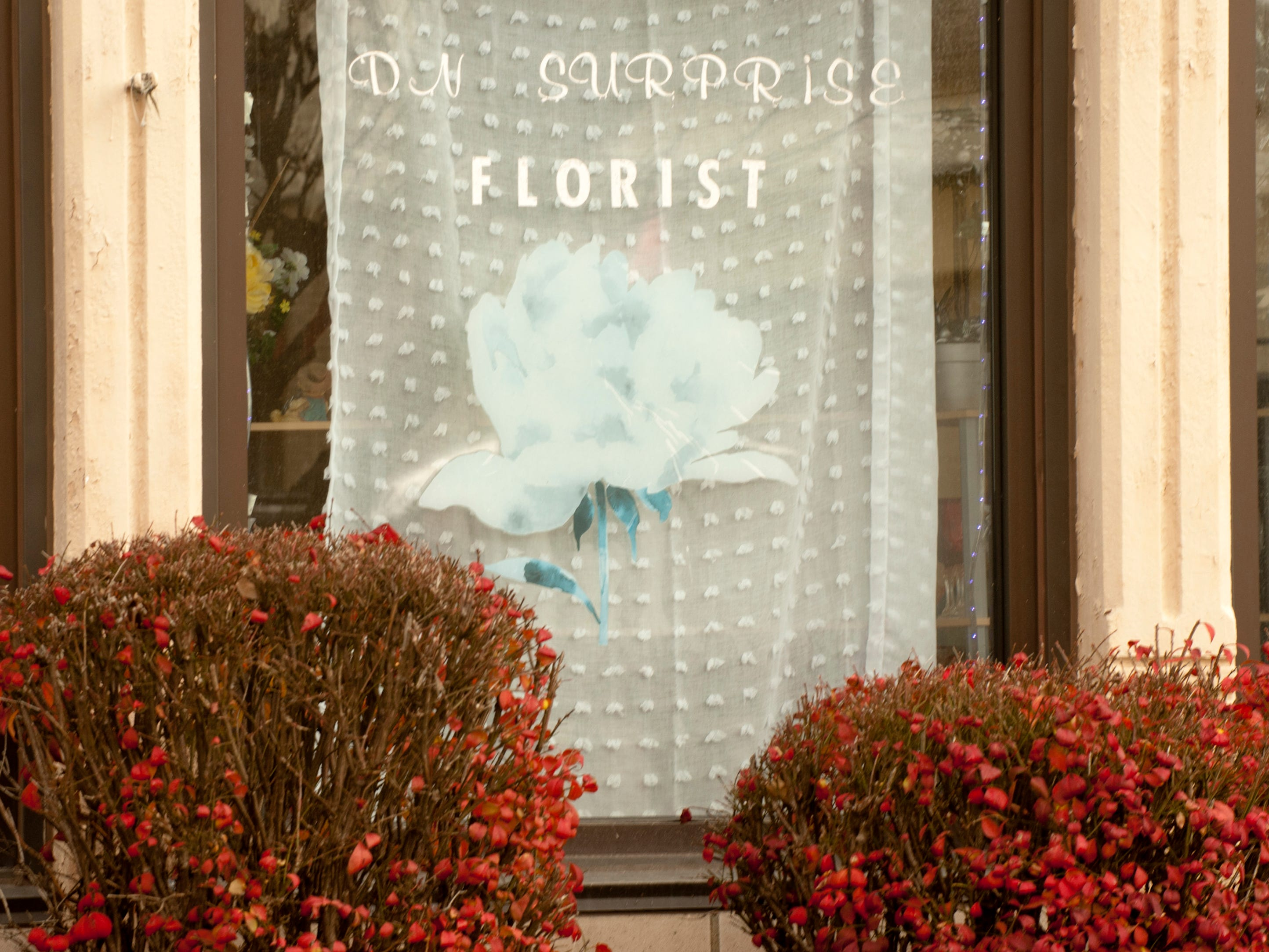 Next door to Blue Palm Access, is the D.N. Surprise Florist Shop, also at 2001 W. Broadway,24 November 2018
