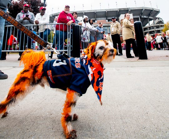 Tiger Jake the dog and his Auburn fan owner Ron Daniels walk past Bryant-Denny Stadium in Tuscaloosa, Ala., before the Iron Bowl on Saturday November 24, 2018.