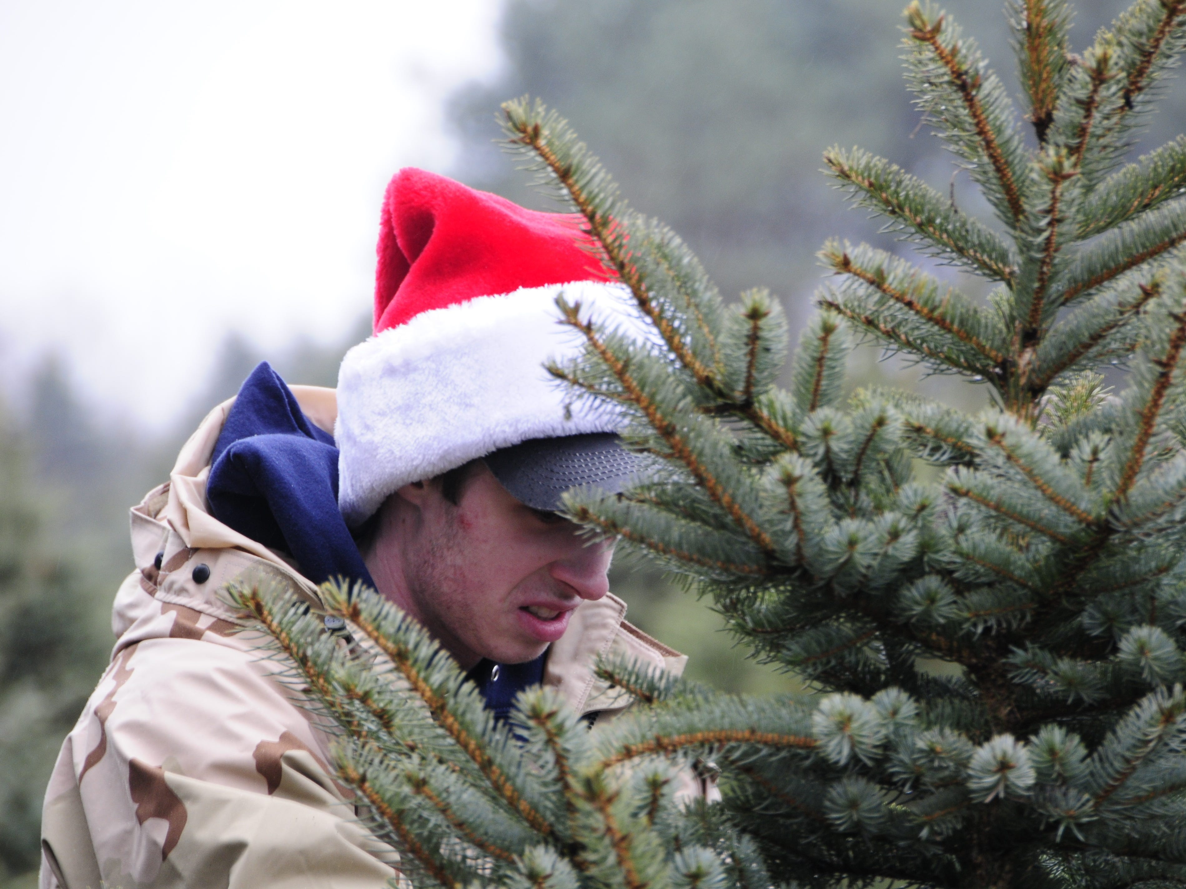 Josh Green sets up a pre-cut Christmas trees at Dunsmore Blue Spruce Tree Farm in Smiths Creek.